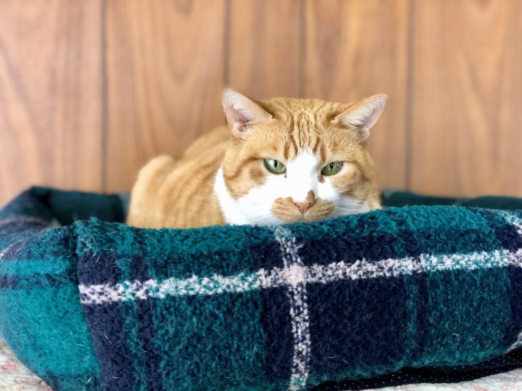 ♀ハイジちゃん保護猫カフェヘミングウェイ