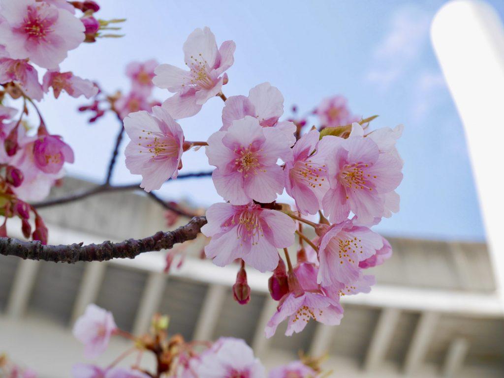 大曽根駅桜2