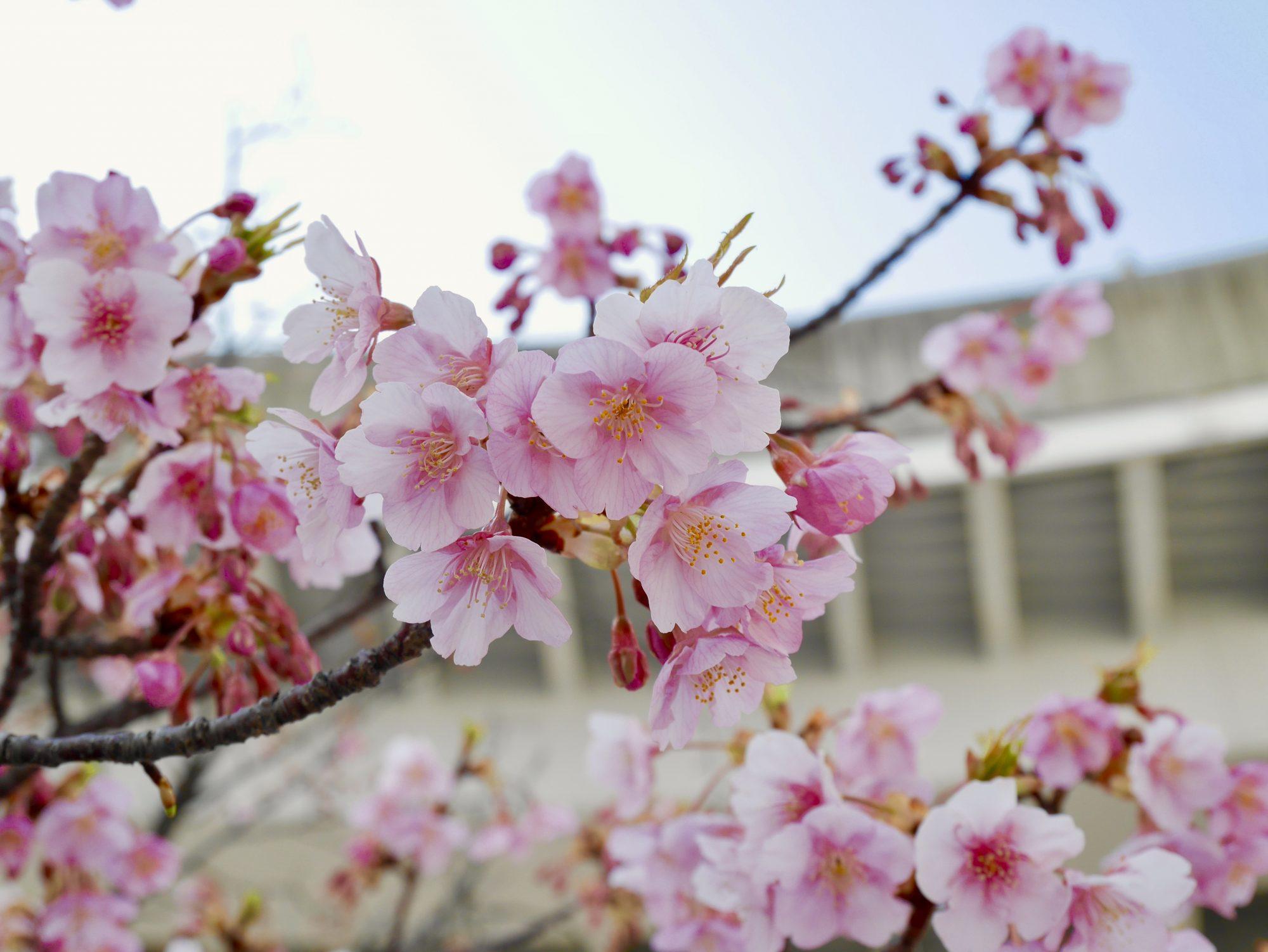 桜の花を見ると、思い出すこと。「時間は待ってくれない」