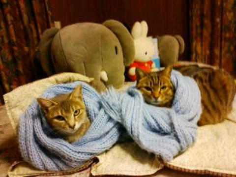 今日はネコじまん♡見ている方もあったかい?猫の親子